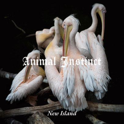 Album Cover Maker Featuring Stunning Pelicans a49e