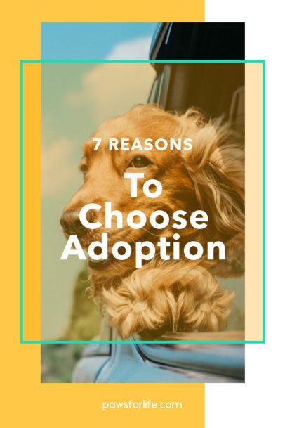 Pinterest Pin Template for a Pet-Focused Post 2150