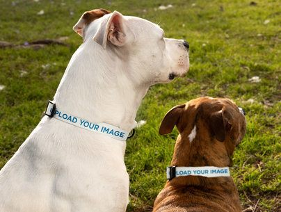 Dog Collar Mockup Featuring Two Dogs at the Park 33300