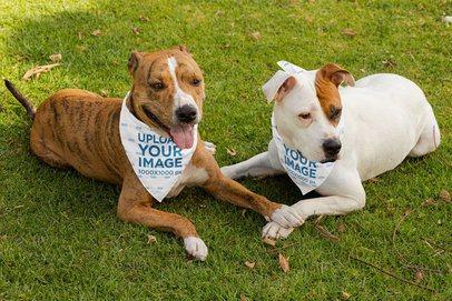 Mockup of Two Dogs Wearing Bandanas 33291